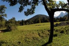 views_sheep